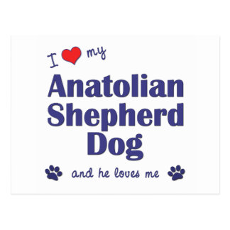 I Love My Anatolian Shepherd Dog (Male Dog) Postcard