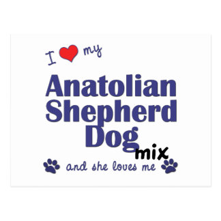 I Love My Anatolian Shepherd Dog Mix (Female Dog) Postcard