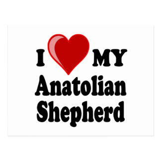 I Love My Anatolian Shepherd Dog Postcard