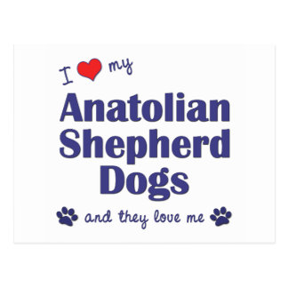 I Love My Anatolian Shepherd Dogs (Multiple Dogs) Postcard