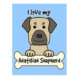 I Love My Anatolian Shepherd Postcard