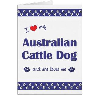 I Love My Australian Cattle Dog (Female Dog) Card