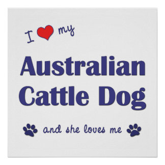 I Love My Australian Cattle Dog Female Dog Print