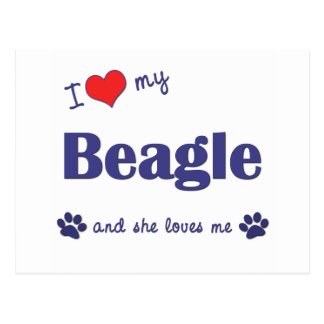 I Love My Beagle (Female Dog) Postcard