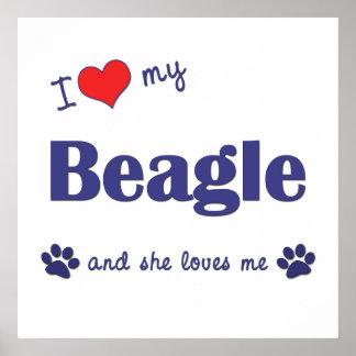 I Love My Beagle Female Dog Posters