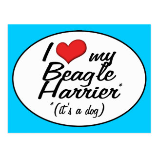I Love My Beagle Harrier (It's a Dog) Post Card