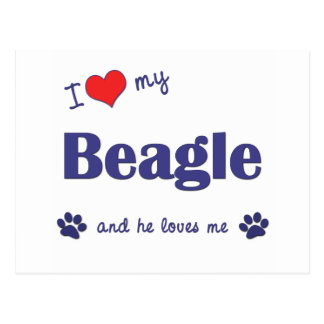 I Love My Beagle (Male Dog) Postcard