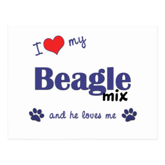 I Love My Beagle Mix (Male Dog) Postcard