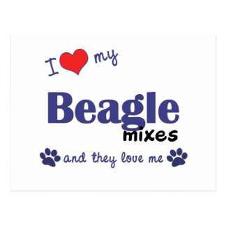 I Love My Beagle Mixes (Multiple Dogs) Postcard