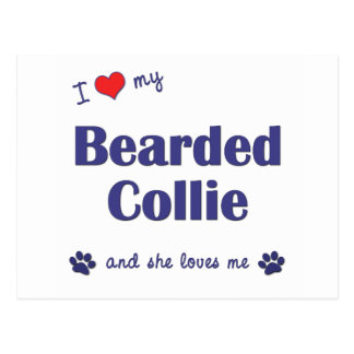 I Love My Bearded Collie (Female Dog) Postcard