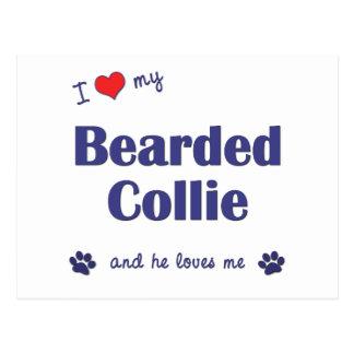 I Love My Bearded Collie (Male Dog) Postcard