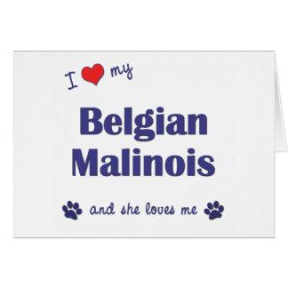 I Love My Belgian Malinois Female Dog Cards