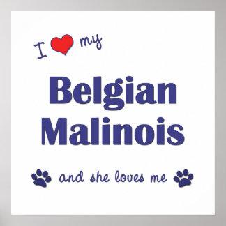 I Love My Belgian Malinois (Female Dog) Posters