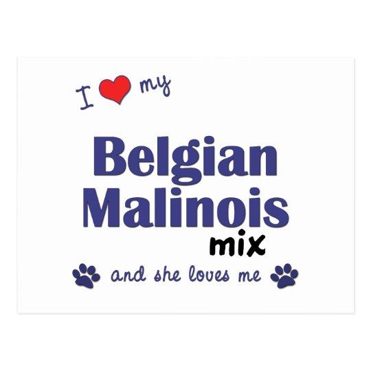 I Love My Belgian Malinois Mix (Female Dog) Postcard