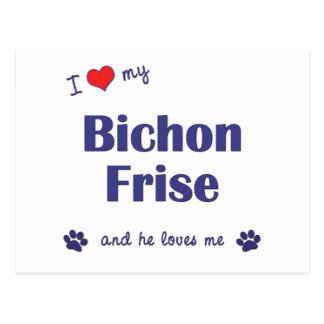 I Love My Bichon Frise Male Dog Post Cards