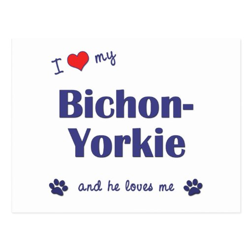 I Love My Bichon-Yorkie (Male Dog) Post Card