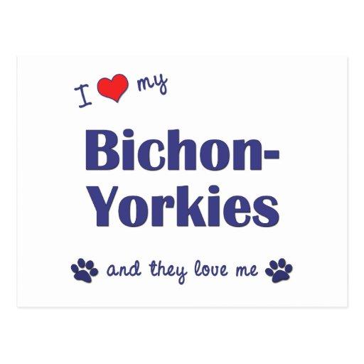 I Love My Bichon-Yorkies (Multiple Dogs) Post Card