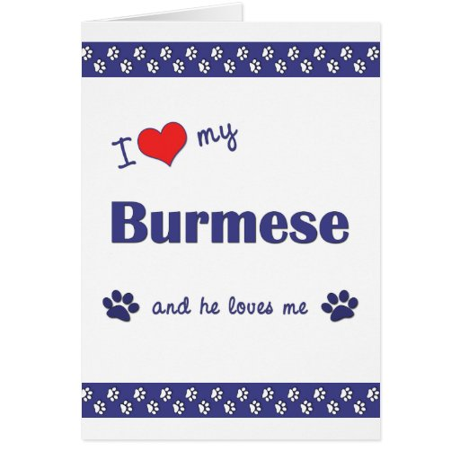 I Love My Burmese (Male Cat) Greeting Card