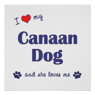 I Love My Canaan Dog Female Dog Poster