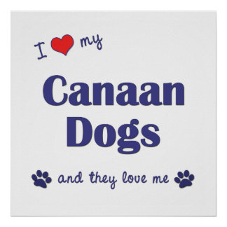 I Love My Canaan Dogs Multiple Dogs Posters