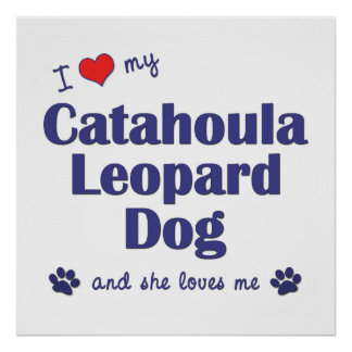 I Love My Catahoula Leopard Dog (Female Dog) Poster