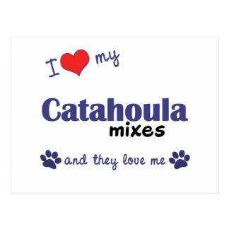 I Love My Catahoula Mixes (Multiple Dogs) Postcard