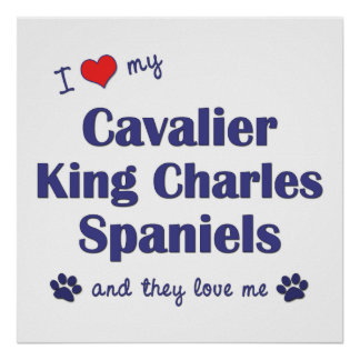 I Love My Cavalier King Charles Spaniels (Multi) Poster