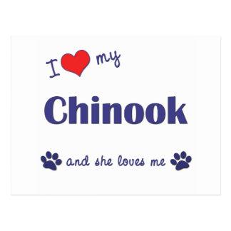 I Love My Chinook (Female Dog) Postcard