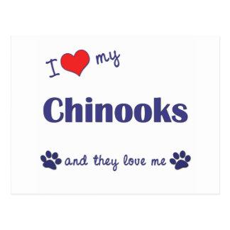 I Love My Chinooks (Multiple Dogs) Postcard