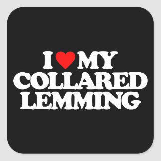 I LOVE MY COLLARED LEMMING SQUARE STICKERS