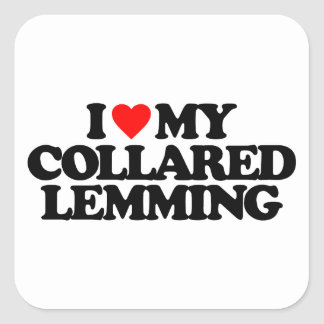 I LOVE MY COLLARED LEMMING SQUARE STICKER