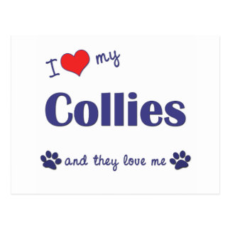 I Love My Collies (Multiple Dogs) Postcard