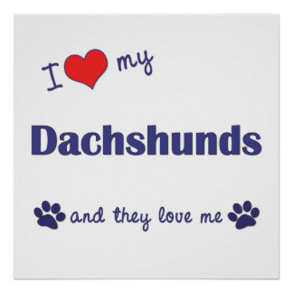 I Love My Dachshunds (Multiple Dogs) Posters