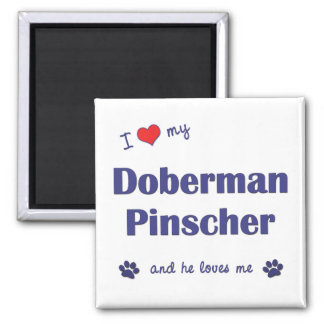 I Love My Doberman Pinscher (Male Dog) Square Magnet