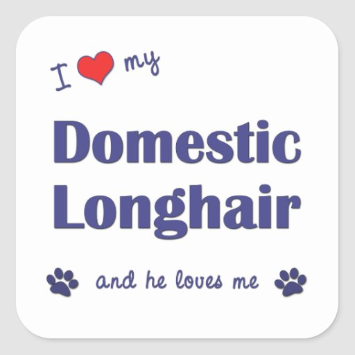 I Love My Domestic Longhair (Male Cat) Sticker