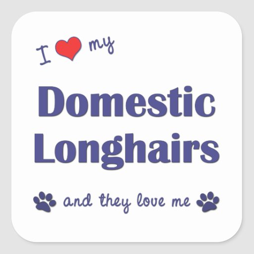 I Love My Domestic Longhairs (Multiple Cats) Stickers