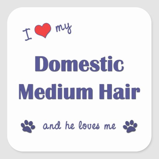 I Love My Domestic Medium Hair (Male Cat) Stickers