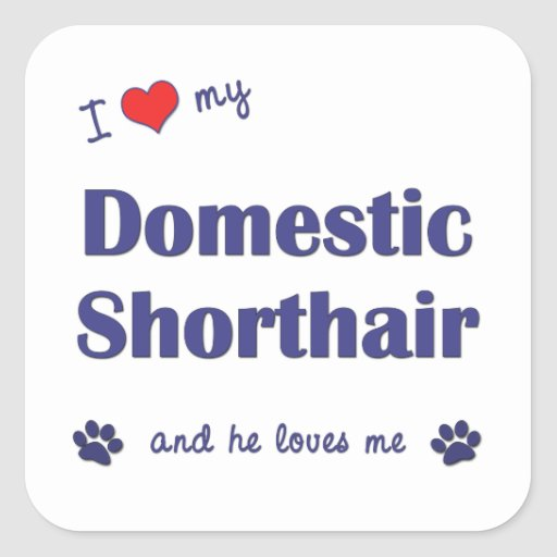 I Love My Domestic Shorthair (Male Cat) Square Sticker