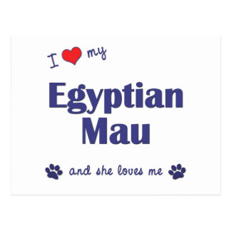 I Love My Egyptian Mau Female Cat Post Cards