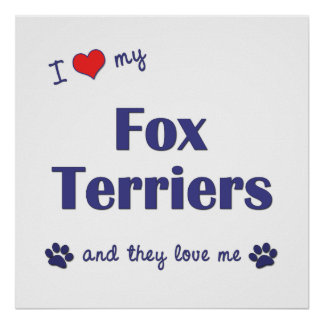 I Love My Fox Terriers Multiple Dogs Poster