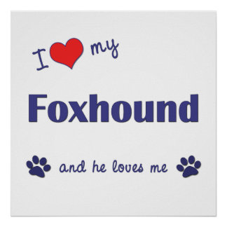 I Love My Foxhound Male Dog Posters
