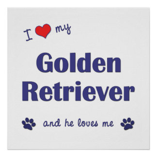 I Love My Golden Retriever (Male Dog) Posters