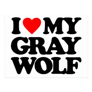 I LOVE MY GRAY WOLF POST CARDS