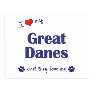 I Love My Great Danes (Multiple Dogs) Postcard