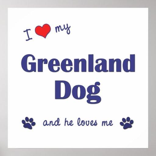 I Love My Greenland Dog (Male Dog) Poster