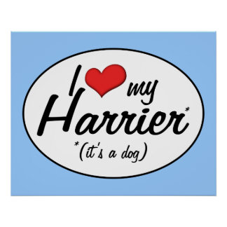 I Love My Harrier It s a Dog Poster