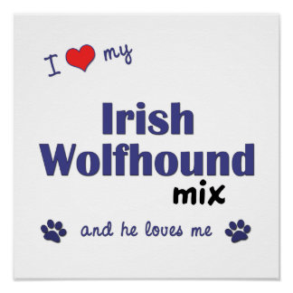 I Love My Irish Wolfhound Mix (Male Dog) Poster