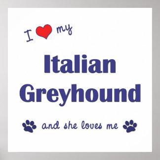 I Love My Italian Greyhound (Female Dog) Posters