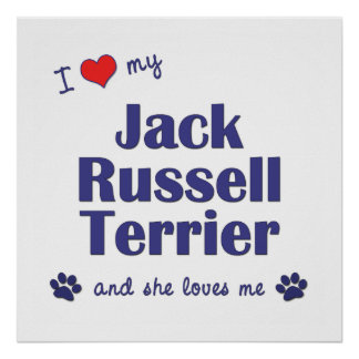 I Love My Jack Russell Terrier (Female Dog) Print