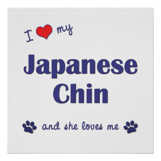 I Love My Japanese Chin (Female Dog) Poster